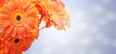 Free Bouquet Of Orange Flowers Royalty Free Stock Photography - 32368147