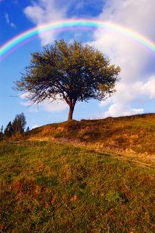 Free Rainbow Over Tree Stock Photography - 32368192