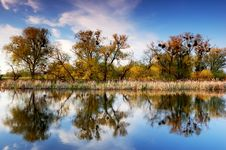 Free Trees On The River Bank Stock Photo - 32368240