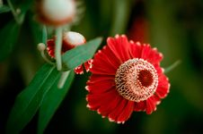 Free Red Flowers Stock Image - 32368281