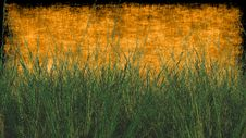 Free Wheat Grass With Textured Background In Orange Royalty Free Stock Photos - 32372788