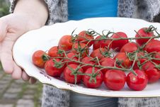 Free Cherry Tomatoes In The Hands On A Platter Royalty Free Stock Images - 32372969