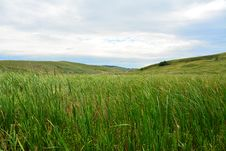 Free Lanscape With Reed And Hills Royalty Free Stock Images - 32381069