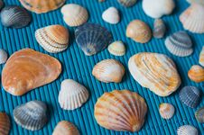 Free Shells On The Blue Bamboo Mat Royalty Free Stock Photo - 32396975