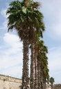 Free Row Of Palms Stock Photos - 3246653