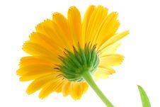 Free Yellow Flower Stock Image - 3241461