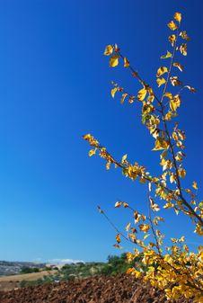 Free Yellow Branch Stock Photo - 3241580