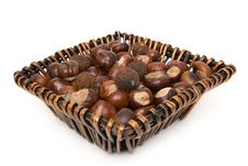 Free Chestnuts Stock Photography - 3241882