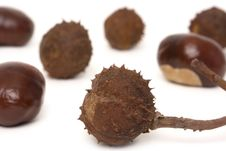 Free Chestnuts Royalty Free Stock Image - 3241996