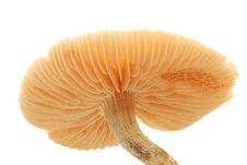 Free Mushroom Stock Image - 3242141