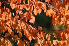 Free Colourful Autumn Royalty Free Stock Photos - 3242158