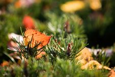 Free Colourful Autumn Royalty Free Stock Photography - 3242177