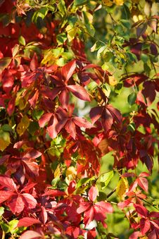Free Colourful Autumn Stock Photography - 3242292