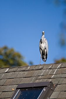 Free Kestrel On Roof Royalty Free Stock Images - 3242759
