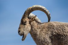Free Mountain Goat Stock Images - 3243544