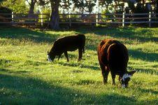 Free High Desert Farm Stock Images - 3244014