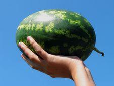 Free Watermelon Stock Photos - 3245233