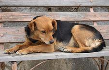 Free Dog Royalty Free Stock Image - 3246536