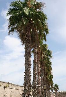 Free Row Of Palms Stock Photos - 3246653
