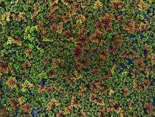 Free Algae Background Stock Photography - 3246682