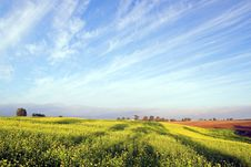Free Stunning Rape Field And Blue S Royalty Free Stock Photos - 3247768