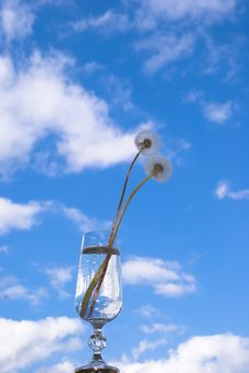 Free Dandelions In The Sky Royalty Free Stock Photos - 3249218