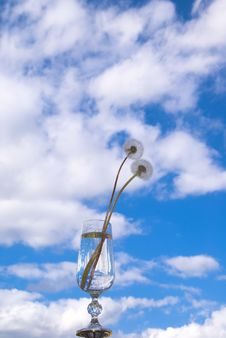 Free Dandelions In The Sky Royalty Free Stock Image - 3249236