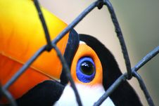 Free Toucan Stock Image - 3249501