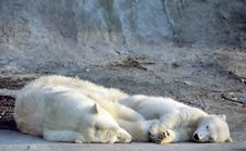 Free Polar Bear With Cub Royalty Free Stock Photography - 3249587