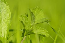 Free Abstract And Green Color,grass Royalty Free Stock Image - 3249796