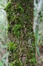 Free Moss Stock Image - 32409881
