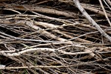 Free Brushwood Stock Photos - 32406713