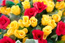 Free Fabric Roses Royalty Free Stock Photography - 32409397