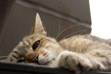 Free Cat Naps Stock Photo - 32420720
