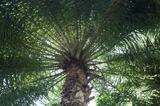 Free Palm Tree Circle Leaves Stock Photos - 32421343