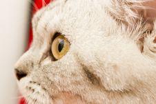Eyes Of A Cat Royalty Free Stock Photos