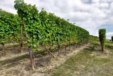 Free Vineyards In Italy Stock Photography - 32433542