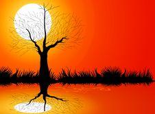 Free Tree Silhouettes Royalty Free Stock Photo - 32436675