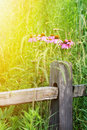 Free Beautiful Fall Flowers Stock Image - 32450101