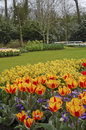 Free Beautiful Spring Flowers In The Keukenhof, The Netherlands Royalty Free Stock Photography - 32450137