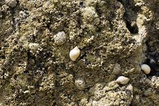 Free Seashells And Fossils Royalty Free Stock Image - 32463406