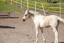 Free Foal Royalty Free Stock Images - 32469179