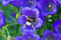 Free Bumblebee Royalty Free Stock Photos - 32485268