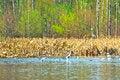 Free Wild Lake Royalty Free Stock Images - 32486719
