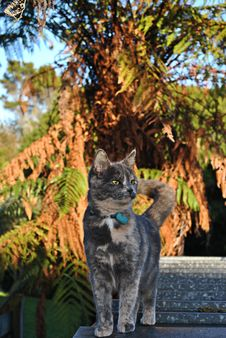 Free Grey Cat On Tin Roof Stock Photos - 32480293