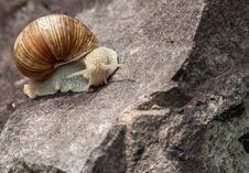 Lonely Snail Close-up In Nature Stock Photo