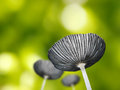 Free Beautiful Young Mushroom Or Toadstool Against Green Background Royalty Free Stock Photos - 32497478