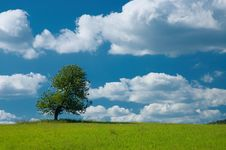 Free Tree In The Meadow Royalty Free Stock Photo - 32491365