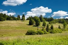 Free Summer Meadow Royalty Free Stock Images - 32491379