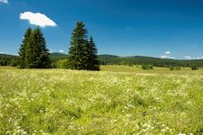 Free Summer Meadow Stock Photo - 32491380